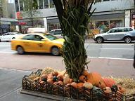 halloween_street.JPG